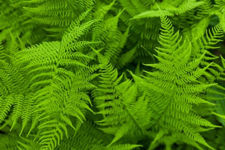 Fresh fern. Close up
