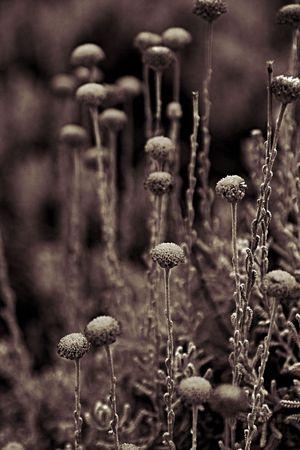 Beautifull composition