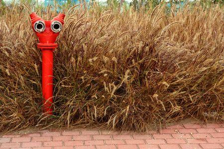 fire-cock near the wheat field Stock Photo