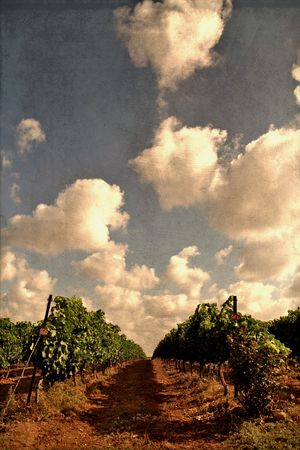 old fashion picture of the grape fields photo