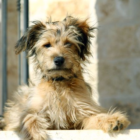 sitting on stairs dog Stock Photo
