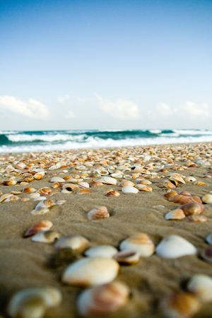 lots of sea shells on the shore