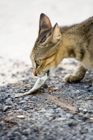 Eating cat