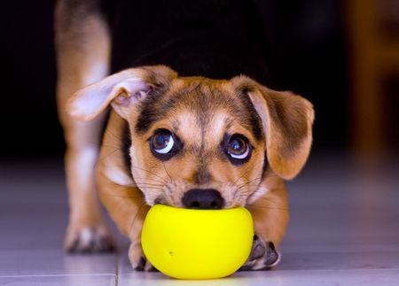 playing puppy Stock Photo