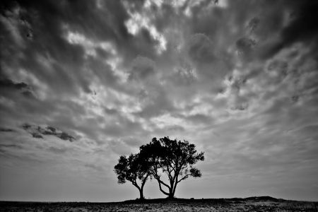 black and white high contrasted photo of two stand alone trees Stock Photo