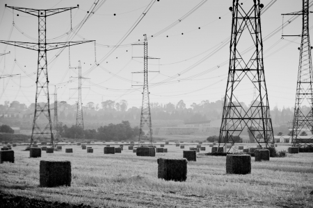 black and white picture, harvesting time in Israel Stock Photo - 7820505