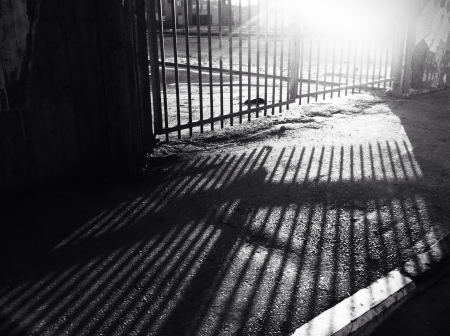 harsh light: Black and white image of parallel Lines of the fence