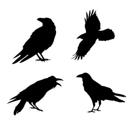 Vector silhouette of a crow. The crow screams, sits, flies. Objects isolated on a white background