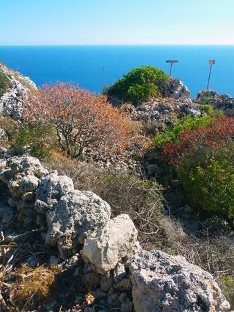 Malta bush