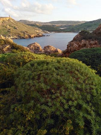 Green bushes on Malta island in sinset light harbour seashore Stockfoto