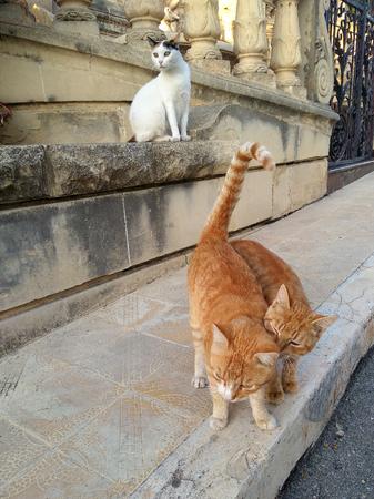 Street cat on Malta and Gozo island. Old city street nice funny kitten.
