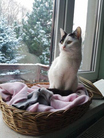 Winter cat on the window Reklamní fotografie