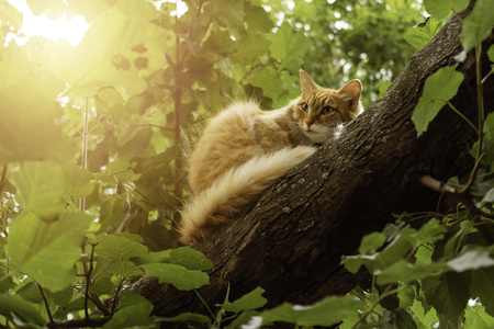 Cute ginger cat sitting on a tree branch