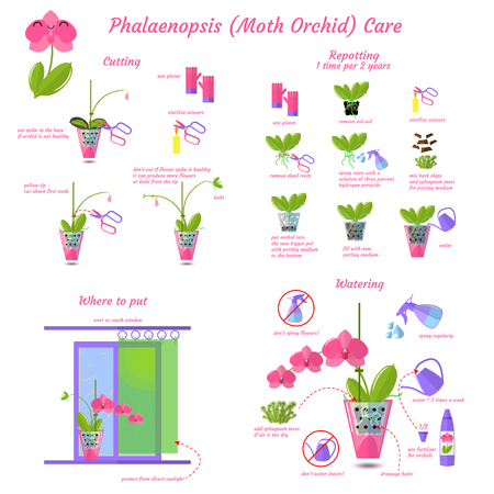 Phalaenopsis moth orchid care flat vector style isolated on white background