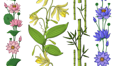 seamless brush from orchid and lotus flowers, bamboo, floral design elements Banque d'images - 124518665