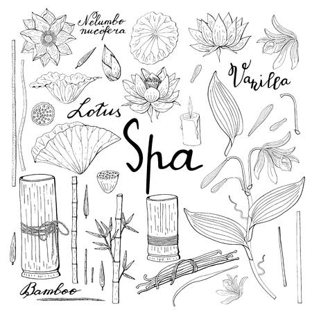 spa set of vanilla orchid, lotus flower, bamboo, floral decoration, botanical design elements Banque d'images - 124518748