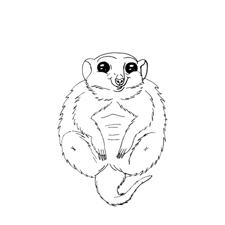 cute funny animal meercat sitting.isolated on white background.stock vector illustration.