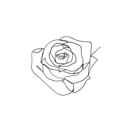 Hand drawn rose flower, one single continuous line drawing.
