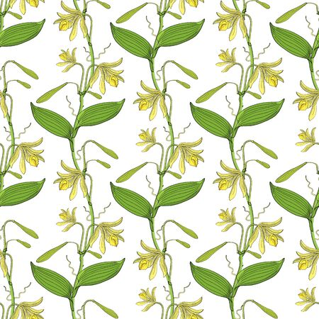 nahtloses Blumenmuster mit Orchideenblüten auf weißem Hintergrund Vektorgrafik