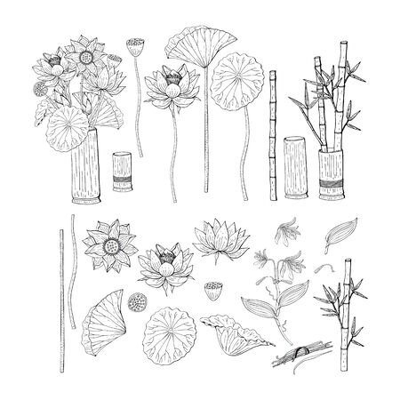 Big set of hand drawn doodle style flowers. Bamboo, lotus Banque d'images - 132105121