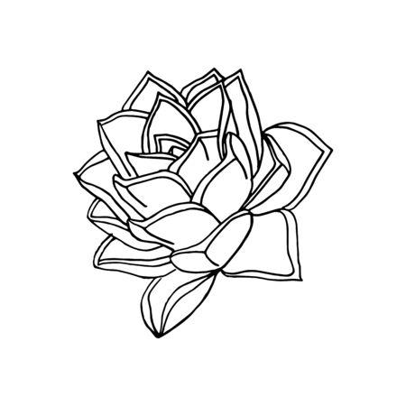 hand drawn flower succulent. floral design element