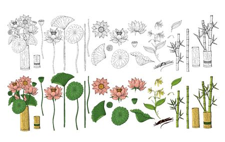 Big set of colorful and monochrome hand drawn doodle style flowers. Bamboo, lotus. Isolated on white background. Stock vector illustration.