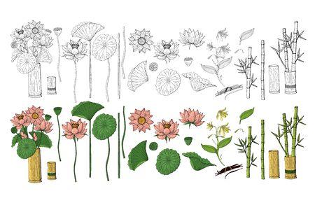 Grand ensemble de fleurs de style doodle dessinés à la main colorés et monochromes. Bambou, lotus. Isolé sur fond blanc. Illustration vectorielle stock. Vecteurs
