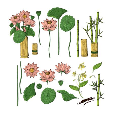 Big set of hand drawn doodle style flowers. Bamboo, lotus. Isolated on white background. Stock vector illustration.