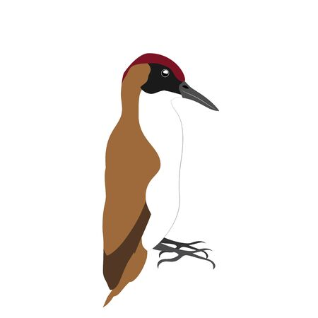 Sitting brown woodpecker isolated on white background. Stock vector illustration. Illustration
