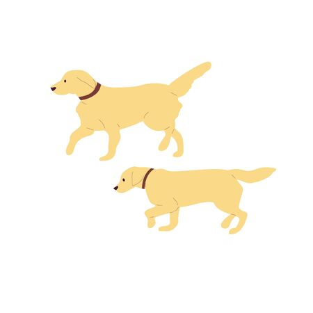 Set of two walking labrador retriever dogs. Isolated on white background. Flat style cartoon stock vector illustration..
