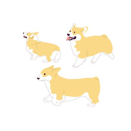 Set of corgi dogs. Isolated on white background. Flat style cartoon stock vector illustration..
