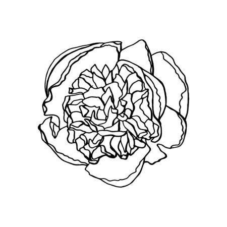 hand drawn peony flower. floral design element isolated on white background. stock vector illustration. 일러스트