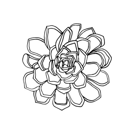 hand drawn flower succulent. floral design element isolated on white background. stock vector illustration.