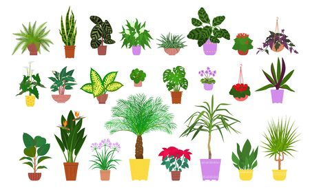 Set of various potted tropical houseplants. Flat style stock vector illustration.