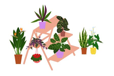 Wooden ladder with houseplants in pots. Vector flat style illustration. Isolated on white background. Standard-Bild - 137051566