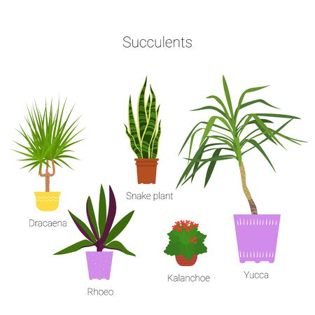 Colorful set of potted succulent houseplants. Flat style vector illustration. Illustration