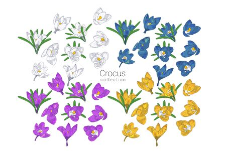 Set of Hand drawn colrful crocus flowers clipart. Floral design element. Isolated on white background. Vector illustration.