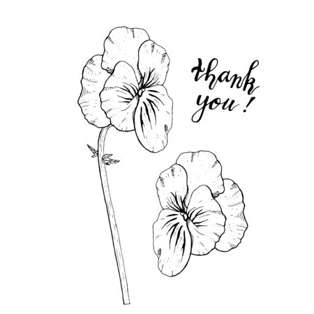 Hand drawn monochrome pansy flowers clipart. Floral design element. Side view. Isolated on white background. Vector illustration.