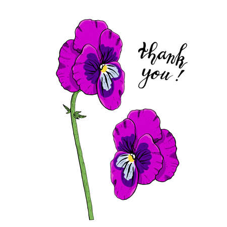 Hand drawn pansy flowers clipart. Floral design element. Side view. Isolated on white background. Vector illustration. Vettoriali