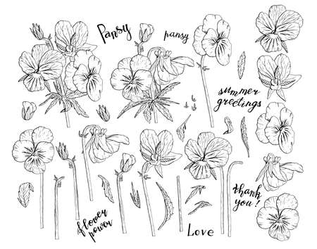 Hand drawn monochrome pansy flowers clipart. Floral design element. Isolated on white background. Vector illustration.