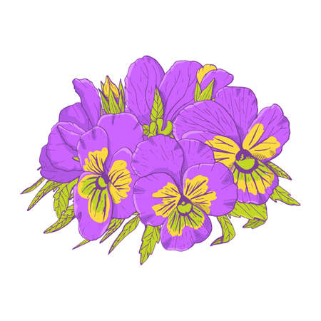 Hand drawn violet pansy flowers clipart. Floral design element. Isolated on white background. Vector
