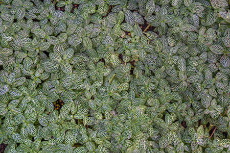 Tropical plant foliage texture. Tropic small leaves with white spots background 写真素材