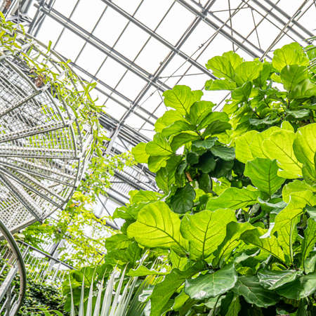 Greenhouse interior, metal frame glass ceiling and tropical plants