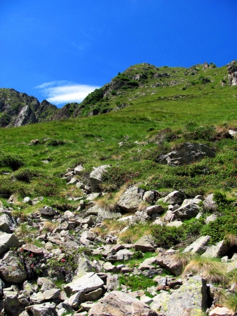 The view while climbing a mountain slope and getting closer to the summit  The steep slope is covered with rocks, grass and bushes with fuchsia flowers  Vertical photo taken in a sunny summer day   Italian Alps landscape - Ponte di Legno, Lombardia   photo