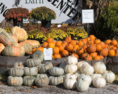 pumpkins forsale photo