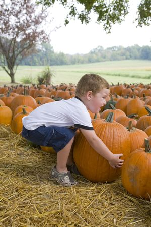 Child looking for the perfect pumkin to take home photo