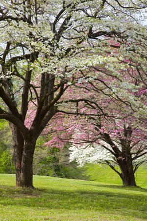 sprung: Spring has sprung,trees are flowering,grass is green