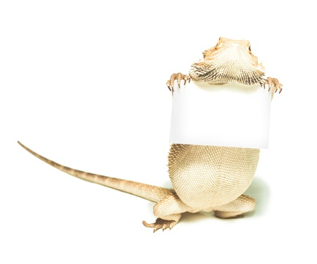 lizard holding card in hand on white background