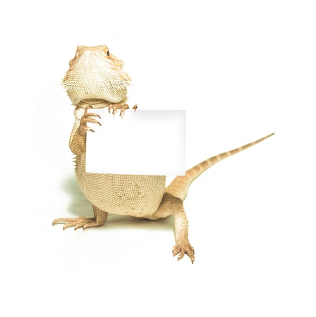 lizard holding card in hand on white background photo
