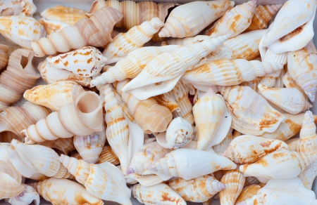 seashells photo
